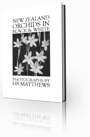 NZ Orchids in Black and White